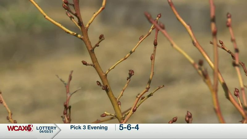 Sharon Meyer & Charlie Nardozzi discuss how to properly prune your blueberry bushes.