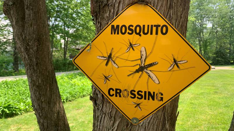 Salisbury is experimenting with a halt to mosquito spraying this summer.