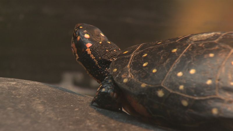 Pet turtles require more care than you might think, and most importantly, they require a...