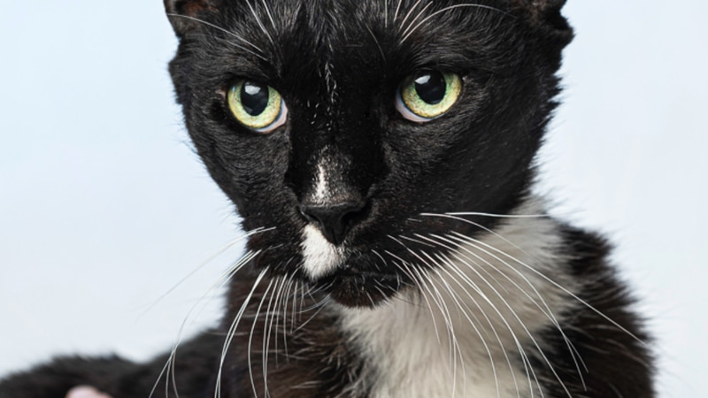 Pets with Potential: Meet Pierre