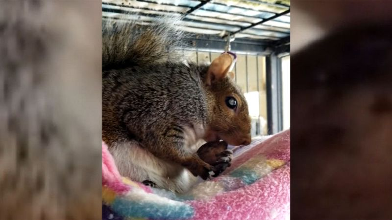 "Wildlife rehabilitator Aimee Brown says the state is threatening to shut her down over ""Peanut""..."