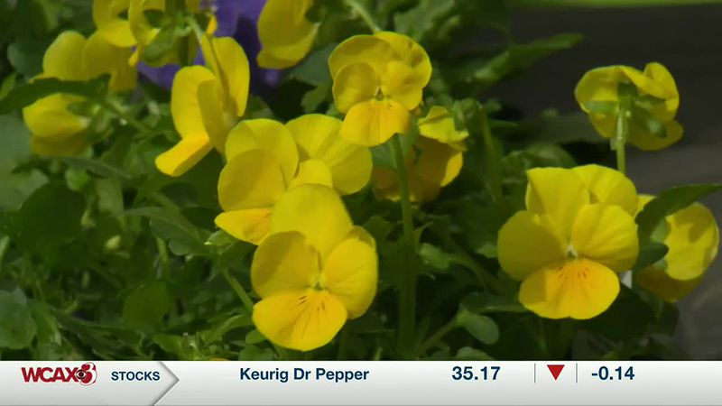 Sharon Meyer and Charlie Nardozzi discuss how you can get a pocket or garden full of Pansies in...