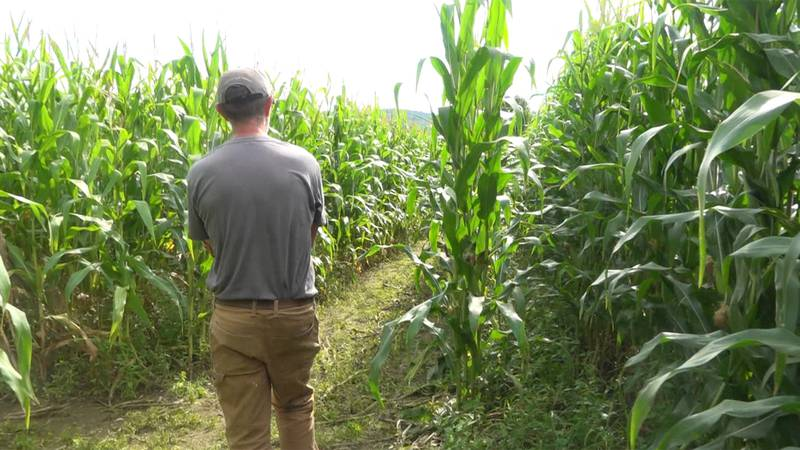 Have you ever wondered what goes into making a corn maze? It might not be what you expected.