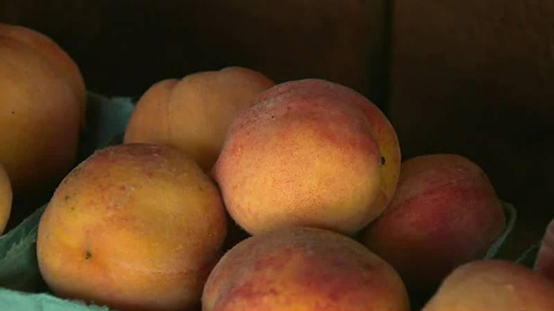 Peaches will be main attraction at Vermont Trade Winds Farm in Shoreham Saturday.