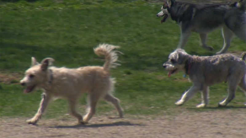 The town of Plattsburgh has kicked off a new campaign that will put one lucky pup in the...