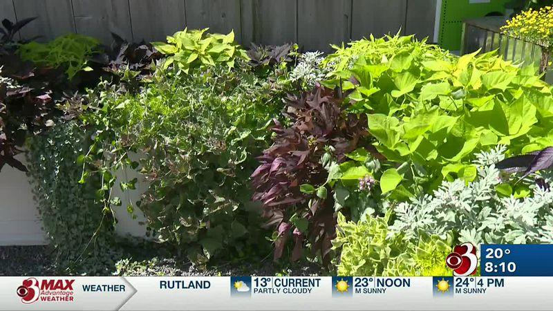 In the garden: Fresh ideas for your garden planning