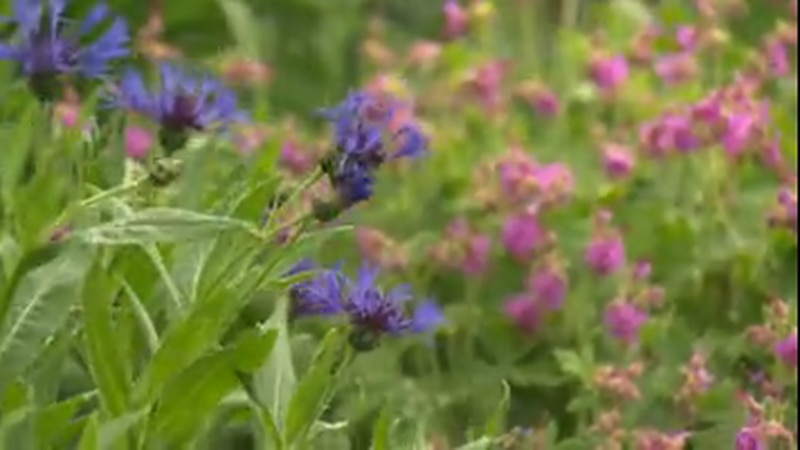 In this week's In the garden we discuss tips for planting perennials.