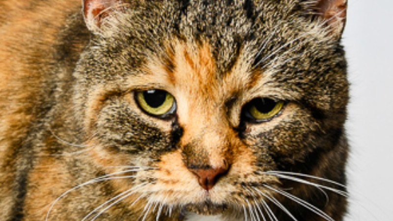 This week's Pet with Potential is Baby, a 16-year-old spayed female