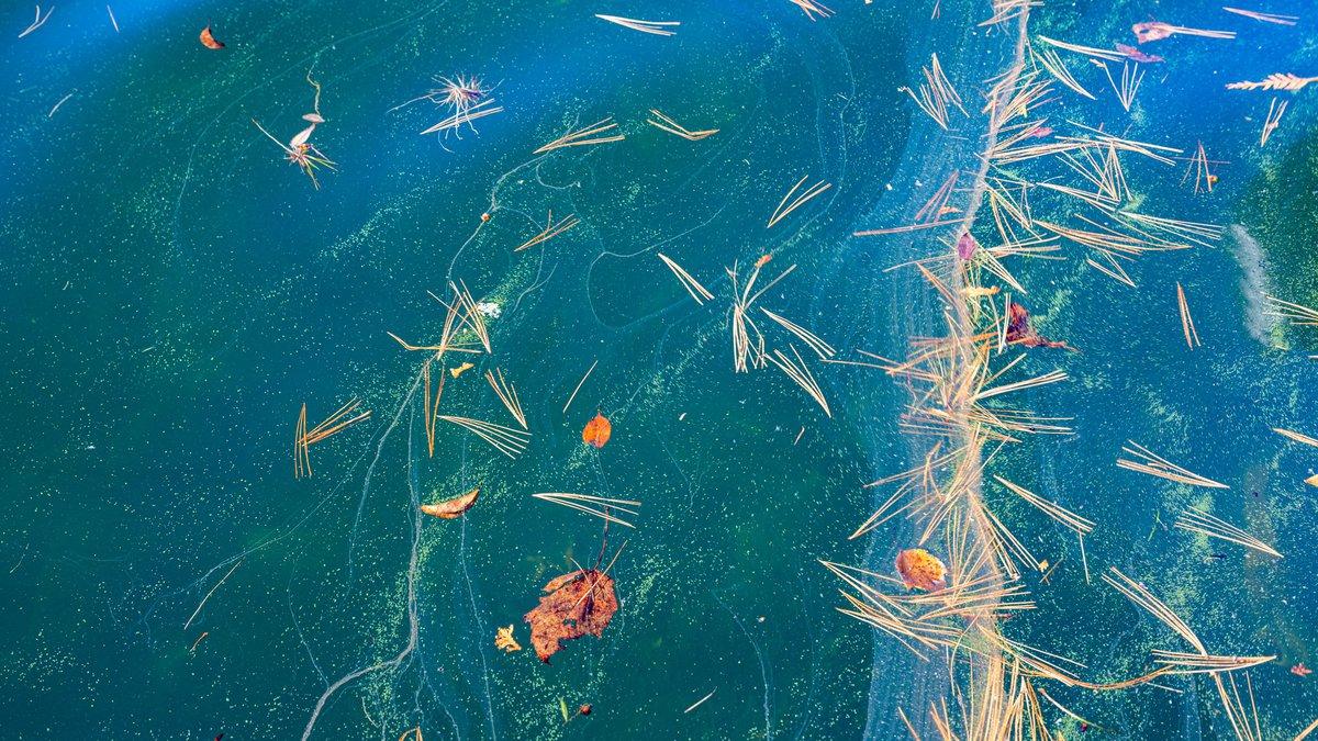 Harmful algal bloom has been confirmed in Lake Placid, New York.