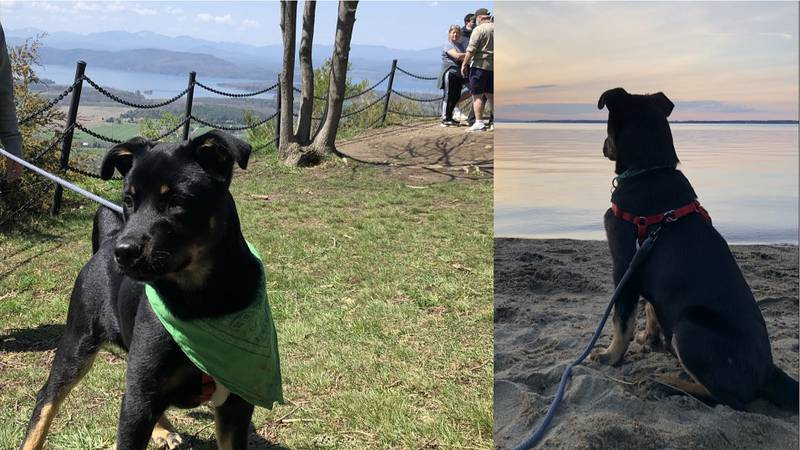 Moose, a rescue dog who lives with his new forever family in Vermont.