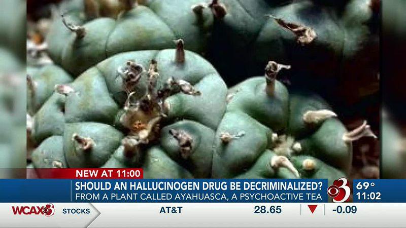 Ayahuasca drug