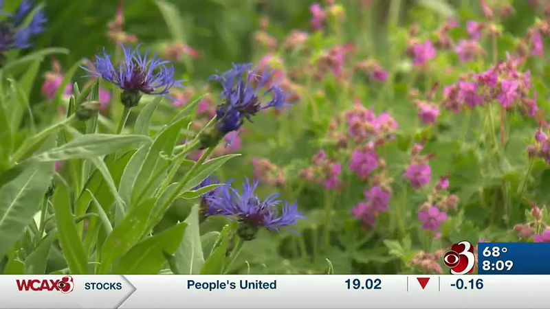 Sharon Meyer and Charlie Nardozzi discuss why perennials are perfect for gardens.
