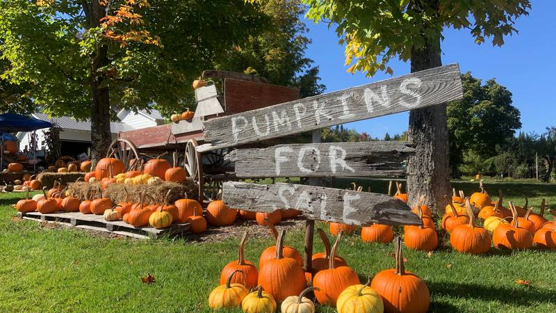 The North Troy Pumpkin Patch