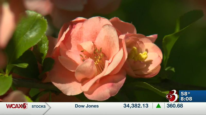 Our Sharon Meyer and garden expert Charlie Nardozzi don't think you should snub the shrub in...