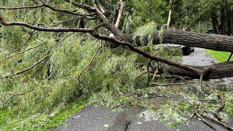 A tree down in Shelburne