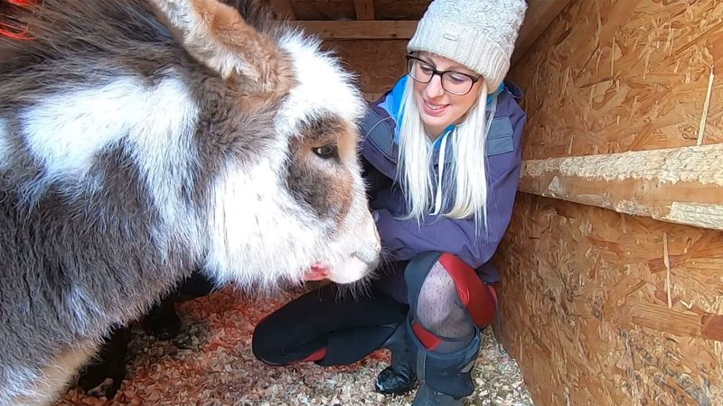 Nelson the miniature donkey with owner Ashley Kirk.