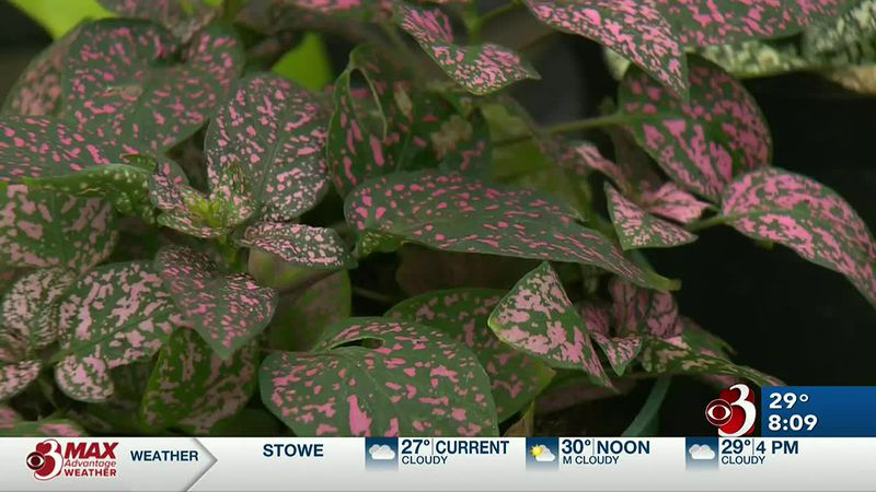 Sharon and Charlie discuss winter plants that make it feel like spring