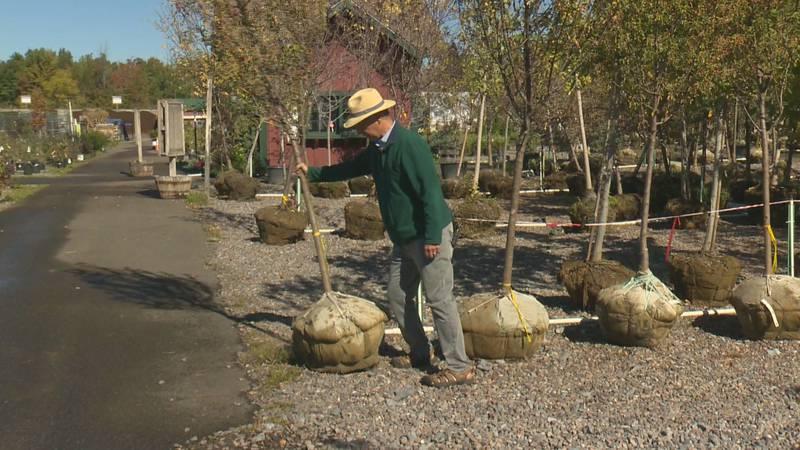 In the Garden: October planting
