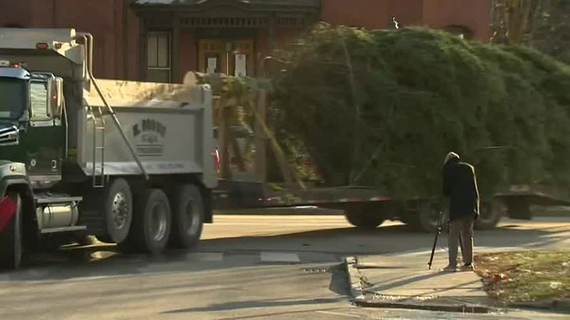 Christmas tree being brought to the Vermont Statehouse