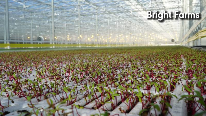 BrightFarms is expanding into New England hoping to make salads a little fresher.