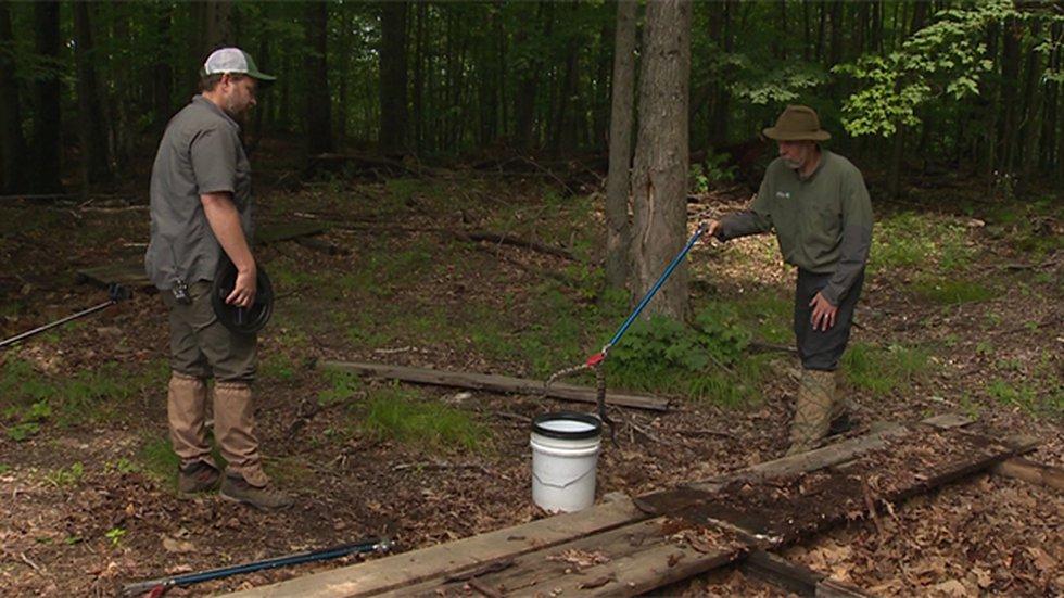 Timber rattlesnake capture