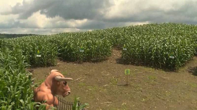 The Great Vermont Corn Maze opened up for the season this weekend.