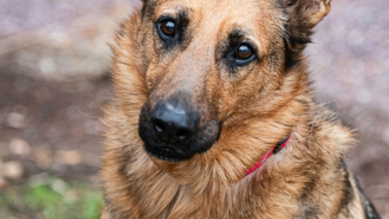 Good boy, 6-years-old, looking for new home