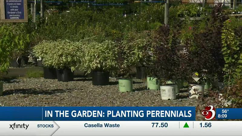 Check out In the garden for this week's fall gardening tips.