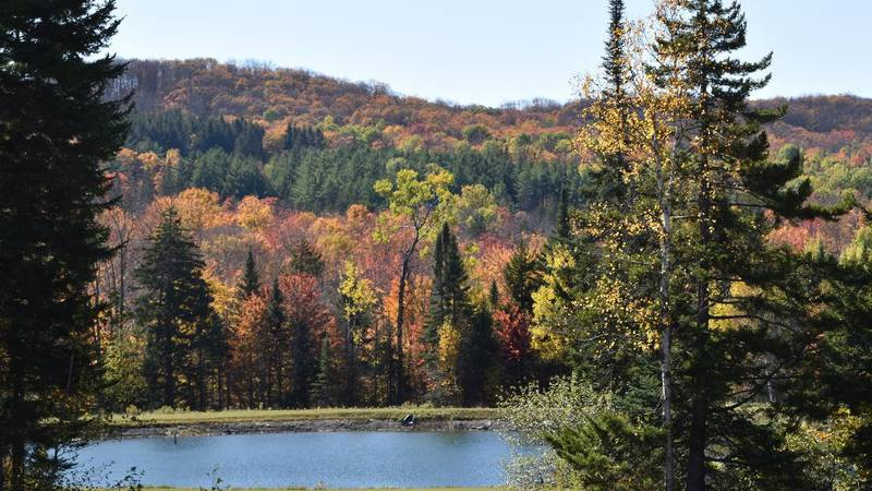 Williamstown fall color