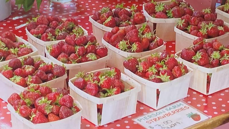 Strawberries at the Pierson Farm in Bradford, Vermont.