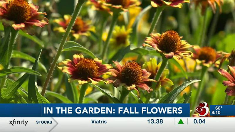 In this segment of In the garden Sharon Meyer and Charlie Nardozzi discuss fall flowers.
