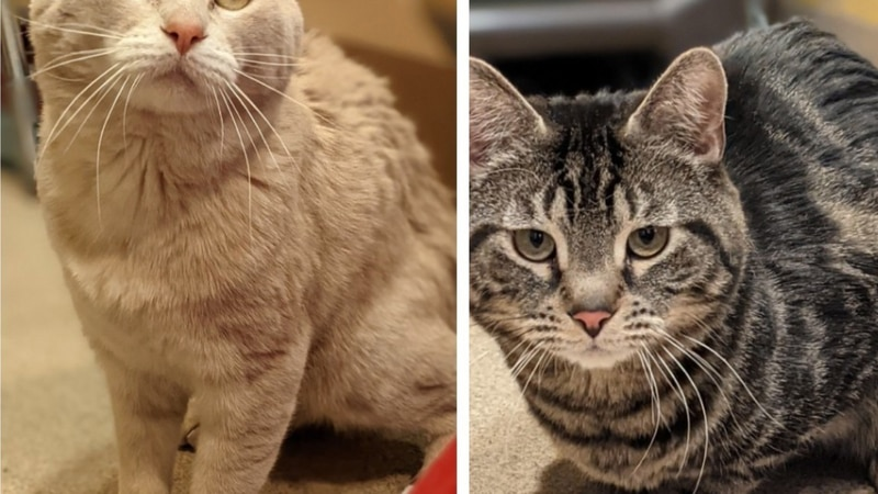 These bonded kitties are looking for their new home.