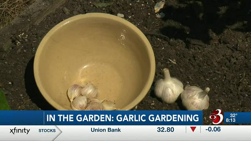 Sharon Meyer & Charlie Nardozzi are discussing gardening tips for garlic on this weeks in the...
