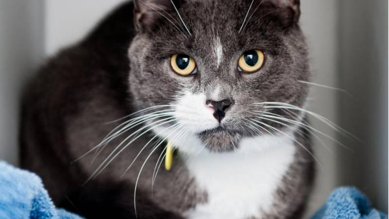 Shadow is looking for a loving fur-ever home.