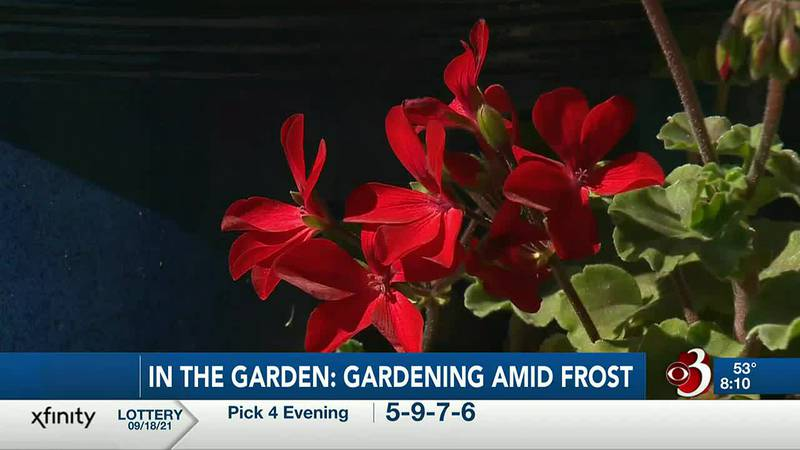 Sharon Meyer and Charlie Nardozzi are giving gardening tips on how to save your plants from...