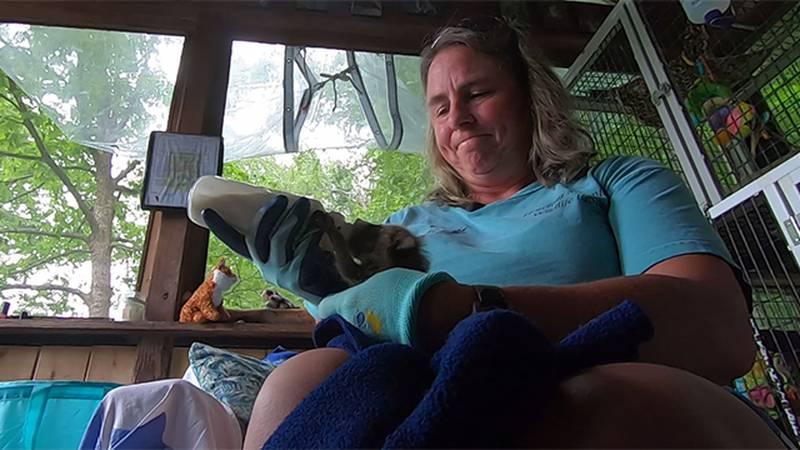 Medora Plimpton with Howling Mountain Wildlife Rescue in Starksboro.