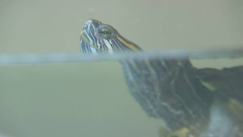 A new animal rescue in Burlington aims to find new homes for some nontraditional pets, like...